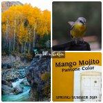 Mango Mojito, Pantone Color, 2019 Pantone Color